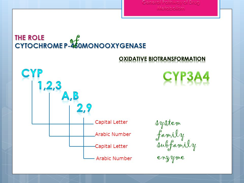 THE ROLE CYTOCHROME P-450MONOOXYGENASE of Capital Letter Arabic Number family Capital Letter subfamily system Arabic Number enzyme