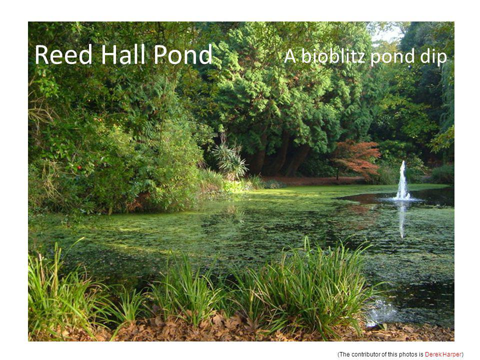 Reed Hall Pond A bioblitz pond dip (The contributor of this photos is Derek Harper )