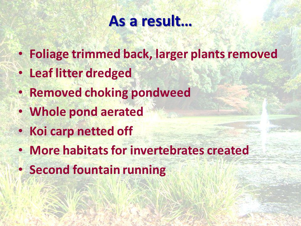 As a result… Foliage trimmed back, larger plants removed Leaf litter dredged Removed choking pondweed Whole pond aerated Koi carp netted off More habitats for invertebrates created Second fountain running