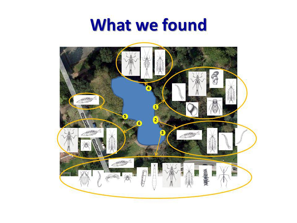 What we found 1 2 3 4 6 5