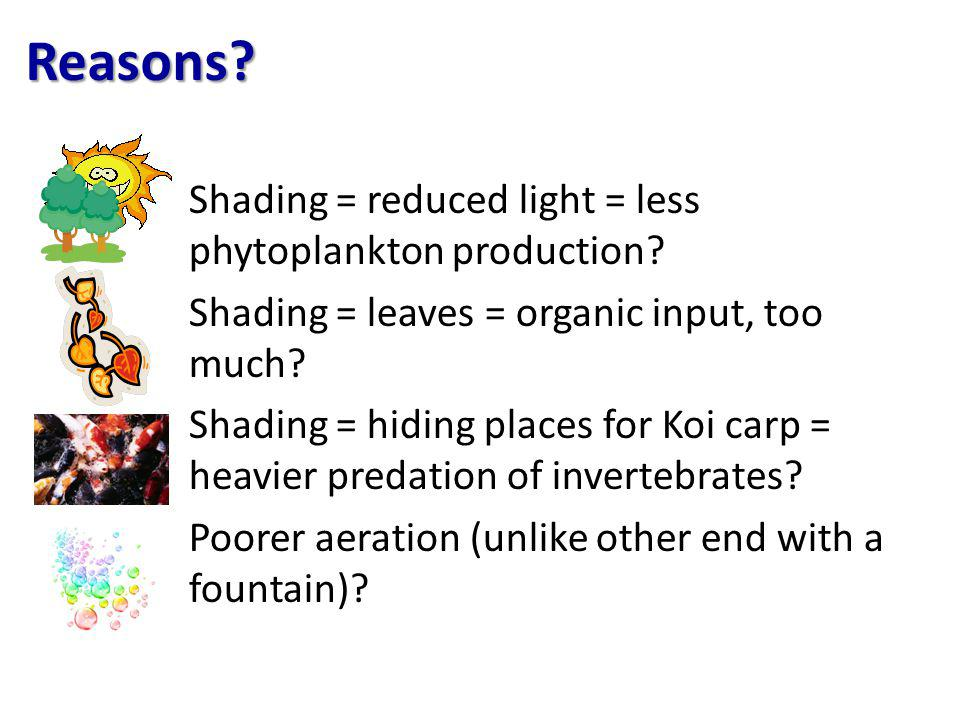 Reasons.Shading = reduced light = less phytoplankton production.