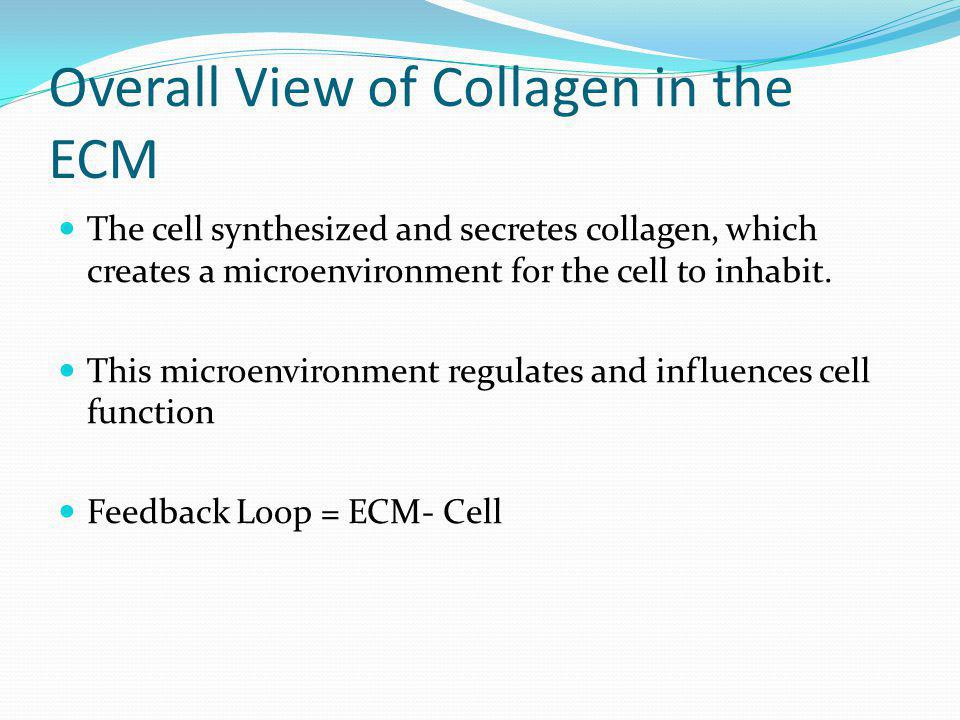 Overall View of Collagen in the ECM The cell synthesized and secretes collagen, which creates a microenvironment for the cell to inhabit. This microen