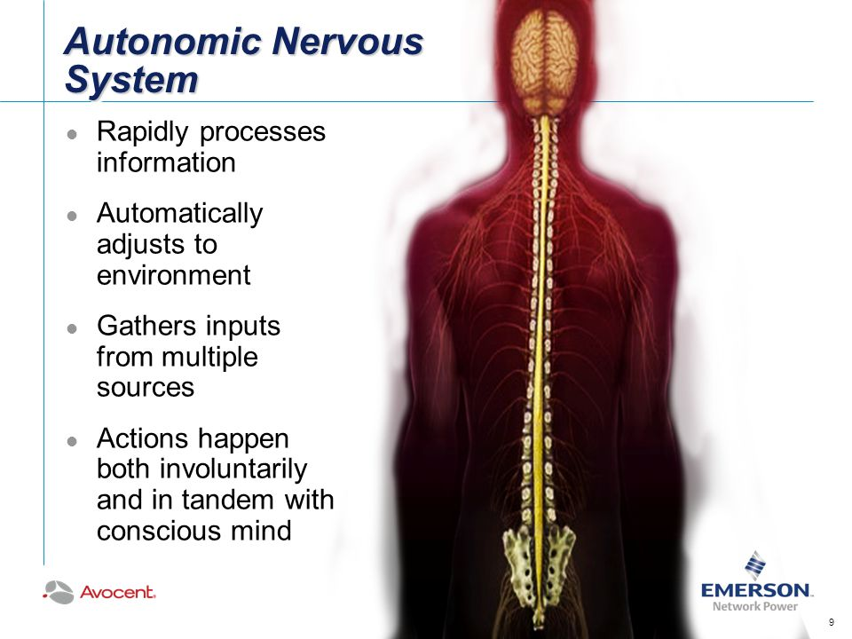 Autonomic Nervous System Rapidly processes information Automatically adjusts to environment Gathers inputs from multiple sources Actions happen both involuntarily and in tandem with conscious mind 9