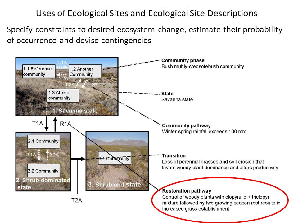 Uses of Ecological Sites and Ecological Site Descriptions Specify constraints to desired ecosystem change, estimate their probability of occurrence an