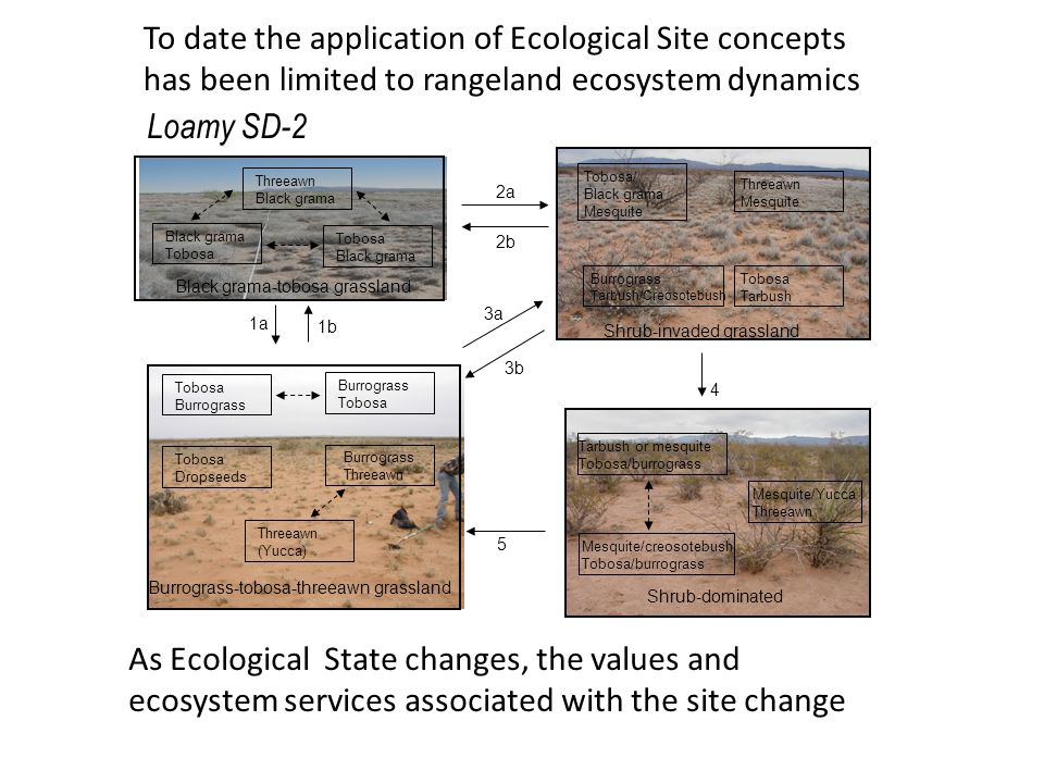 To date the application of Ecological Site concepts has been limited to rangeland ecosystem dynamics Loamy SD-2 As Ecological State changes, the value