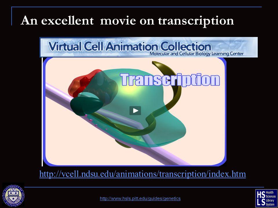 An excellent movie on transcription http://www.hsls.pitt.edu/guides/genetics http://vcell.ndsu.edu/animations/transcription/index.htm