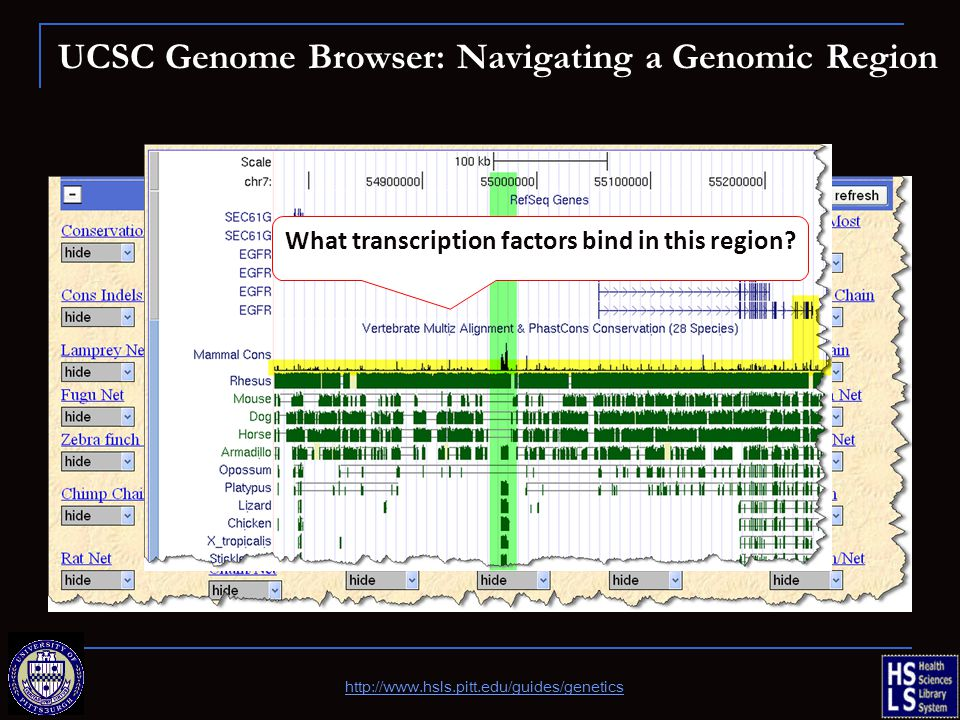 UCSC Genome Browser: Navigating a Genomic Region What transcription factors bind in this region? http://www.hsls.pitt.edu/guides/genetics