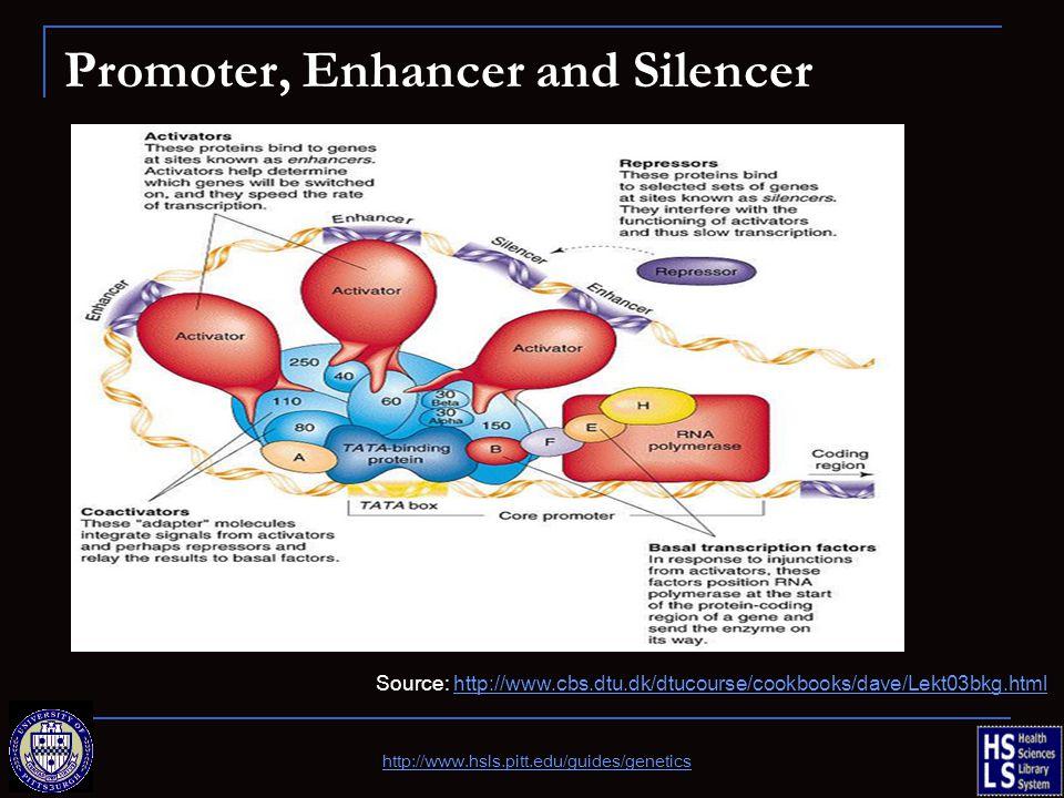 Promoter, Enhancer and Silencer Source: http://www.cbs.dtu.dk/dtucourse/cookbooks/dave/Lekt03bkg.htmlhttp://www.cbs.dtu.dk/dtucourse/cookbooks/dave/Le