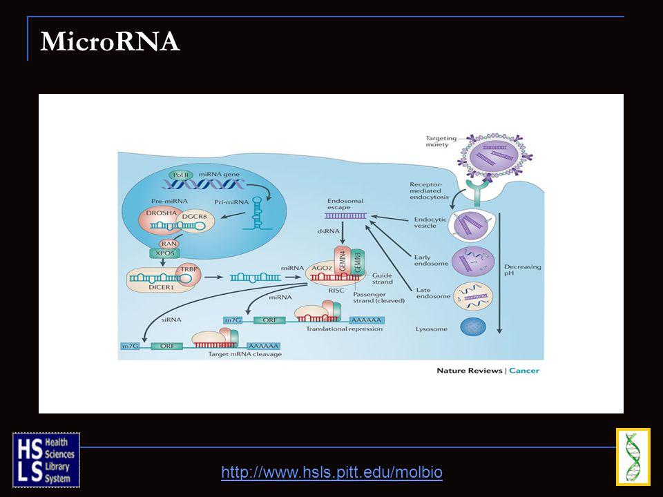 MicroRNA http://www.hsls.pitt.edu/molbio