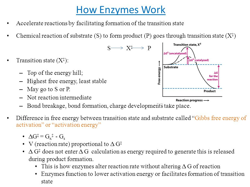 How Enzymes Work Accelerate reactions by facilitating formation of the transition state Chemical reaction of substrate (S) to form product (P) goes th