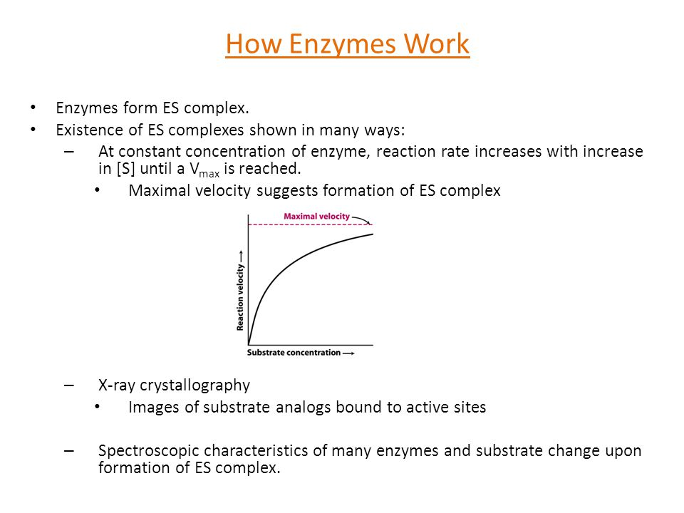 Enzymes form ES complex. Existence of ES complexes shown in many ways: – At constant concentration of enzyme, reaction rate increases with increase in