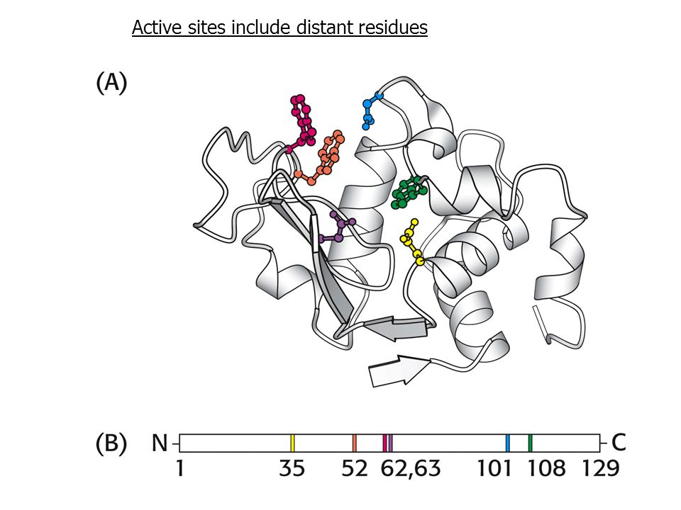 Active sites include distant residues