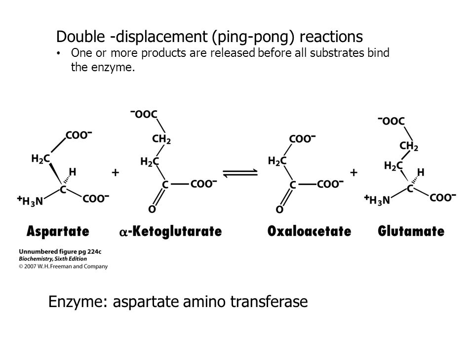 Double -displacement (ping-pong) reactions One or more products are released before all substrates bind the enzyme. Enzyme: aspartate amino transferas
