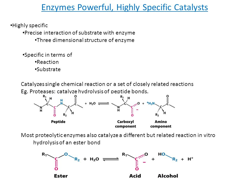 Enzymes Powerful, Highly Specific Catalysts Highly specific Precise interaction of substrate with enzyme Three dimensional structure of enzyme Specifi