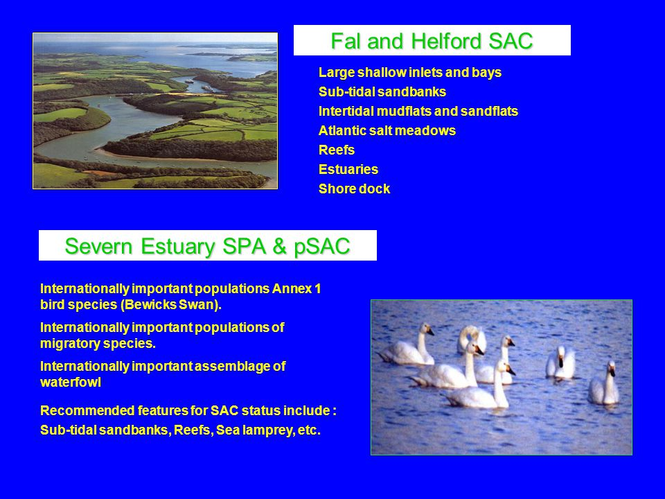Severn Estuary SPA & pSAC Recommended features for SAC status include : Sub-tidal sandbanks, Reefs, Sea lamprey, etc.