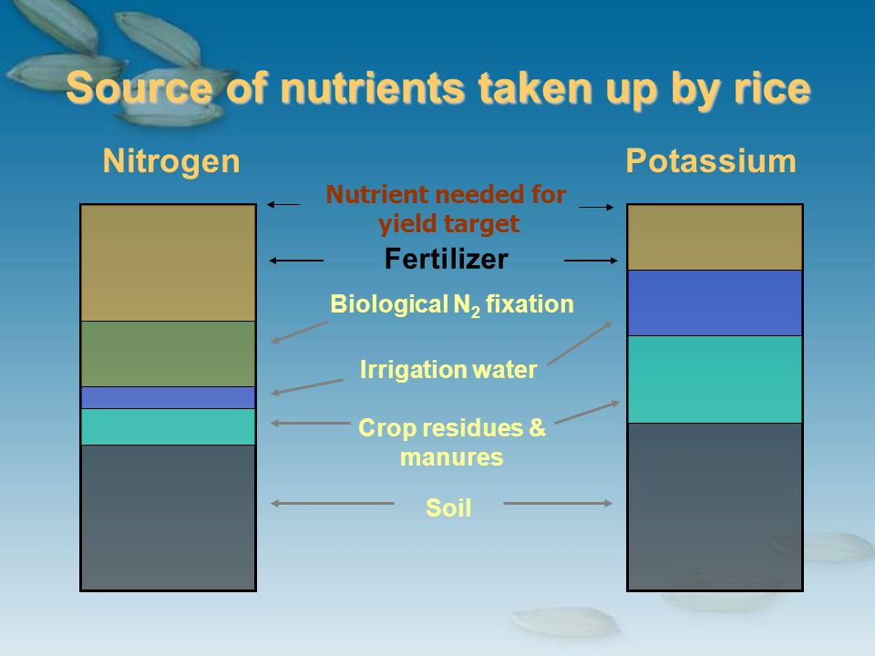 Soil Source of nutrients taken up by rice NitrogenPotassium Fertilizer Biological N 2 fixation Irrigation water Crop residues & manures Nutrient neede