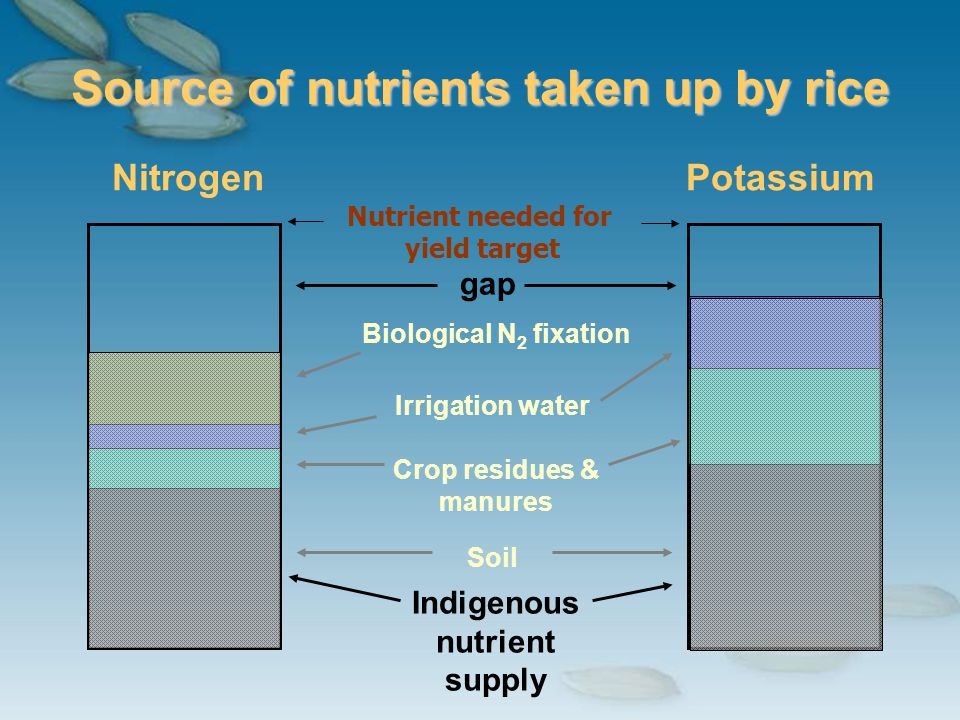 Soil Source of nutrients taken up by rice NitrogenPotassium Biological N 2 fixation Irrigation water Crop residues & manures Indigenous nutrient suppl