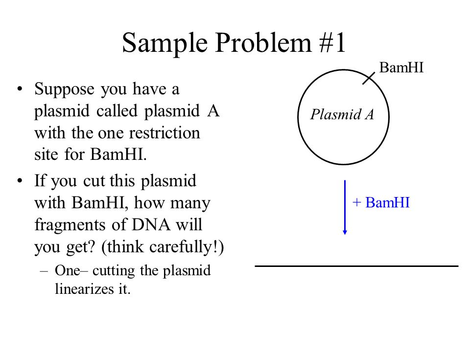 Plasmid Mapping In order to use a plasmid to create recombinant plasmids, we need to find out –Which restriction enzymes will cut a particular plasmid