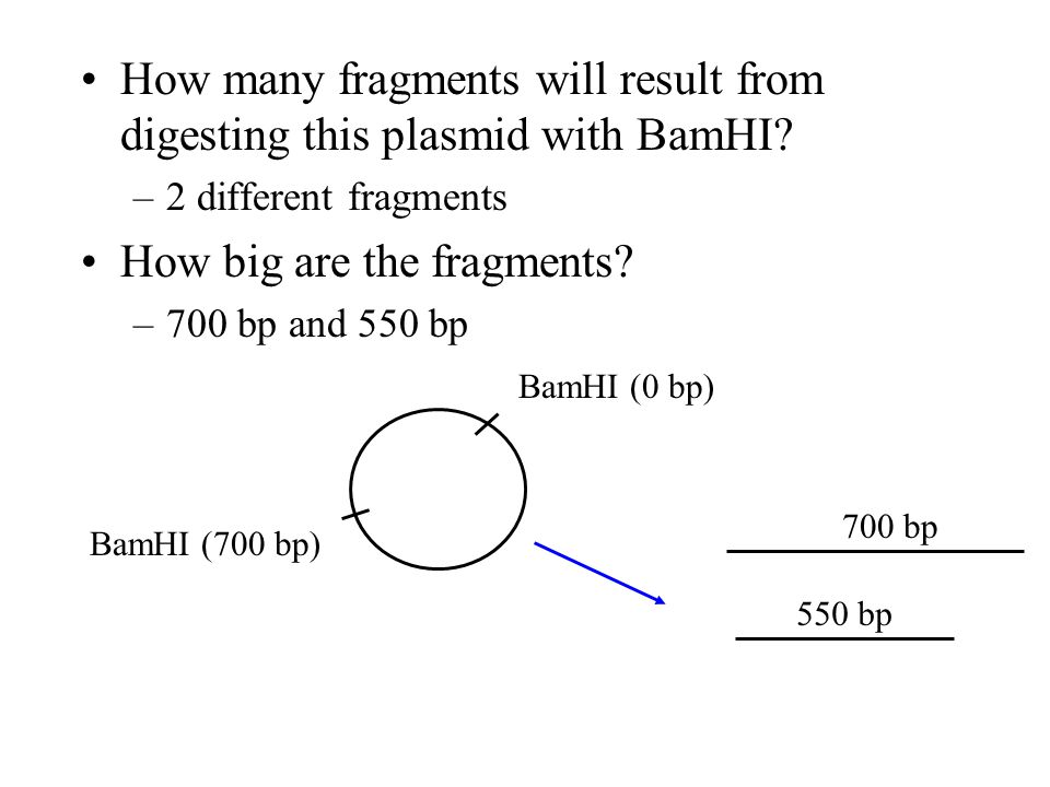Sample Problem #2 Suppose you have another plasmid called plasmid B that has 2 restriction sites for BamHI: BamHI (0 bp) BamHI (700 bp) One restrictio