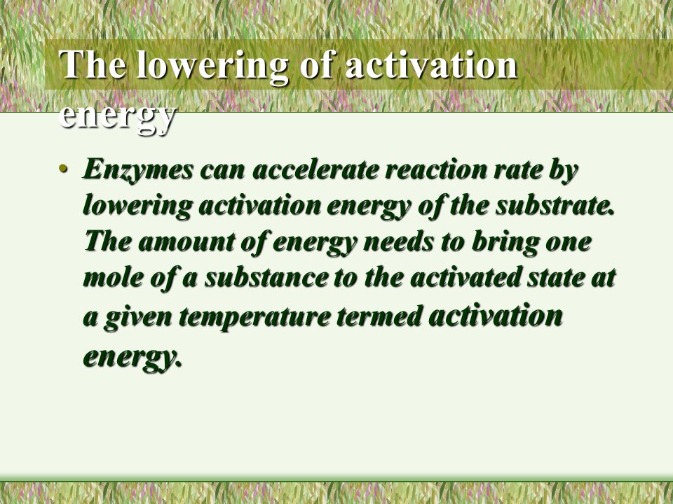 Enzymes as organic catalysts The lowering of activation energy.The lowering of activation energy.
