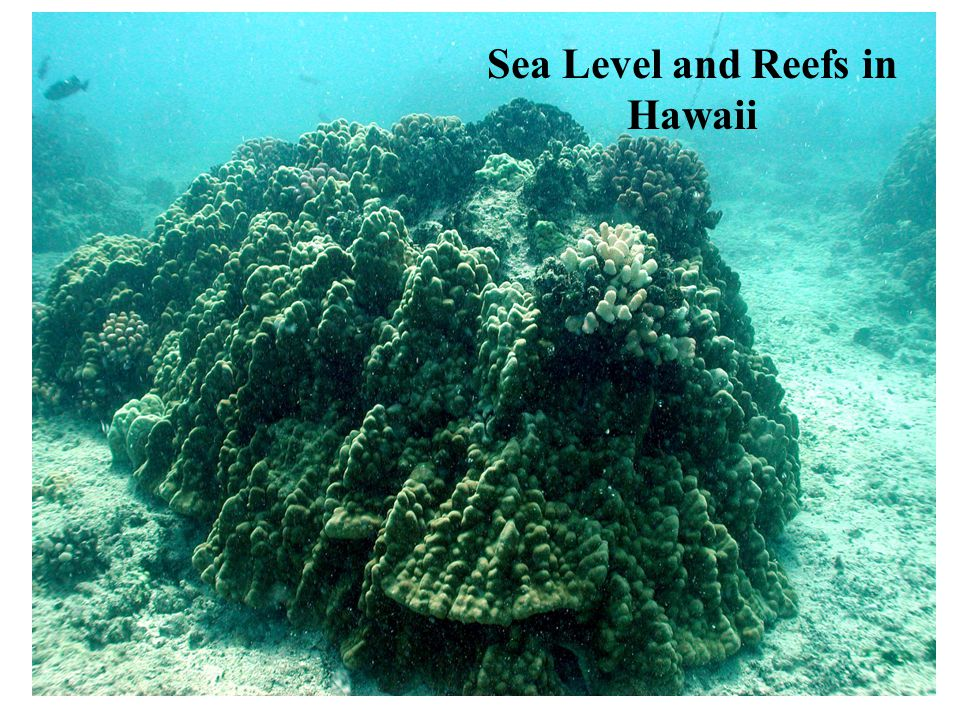 Sea Level and Reefs in Hawaii