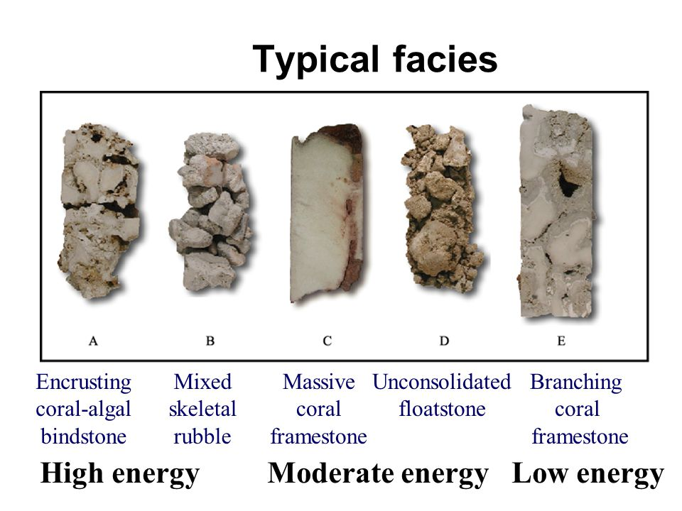 Typical facies Branching coral framestone Encrusting coral-algal bindstone Mixed skeletal rubble Massive coral framestone Unconsolidated floatstone High energy Moderate energy Low energy