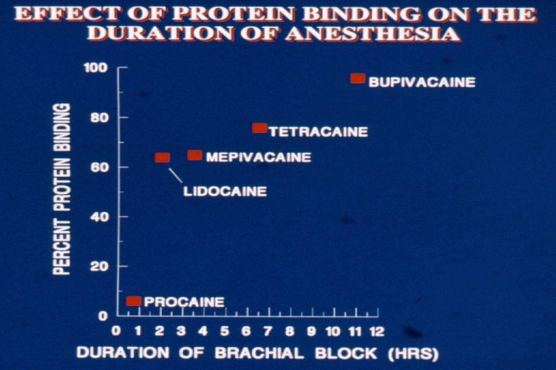 Protein Binding = Duration Lipid Bi-layer Protein Na+ Channel