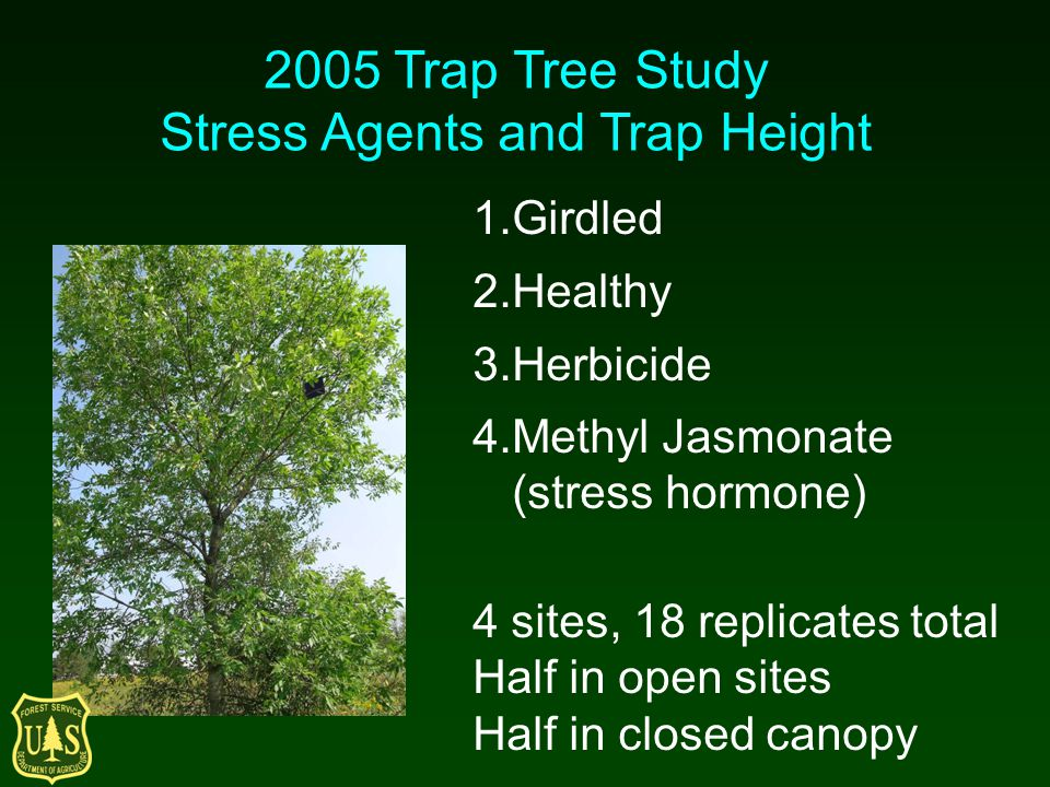 2005 Trap Tree Study Stress Agents and Trap Height 1.Girdled 2.Healthy 3.Herbicide 4.Methyl Jasmonate (stress hormone) 4 sites, 18 replicates total Ha