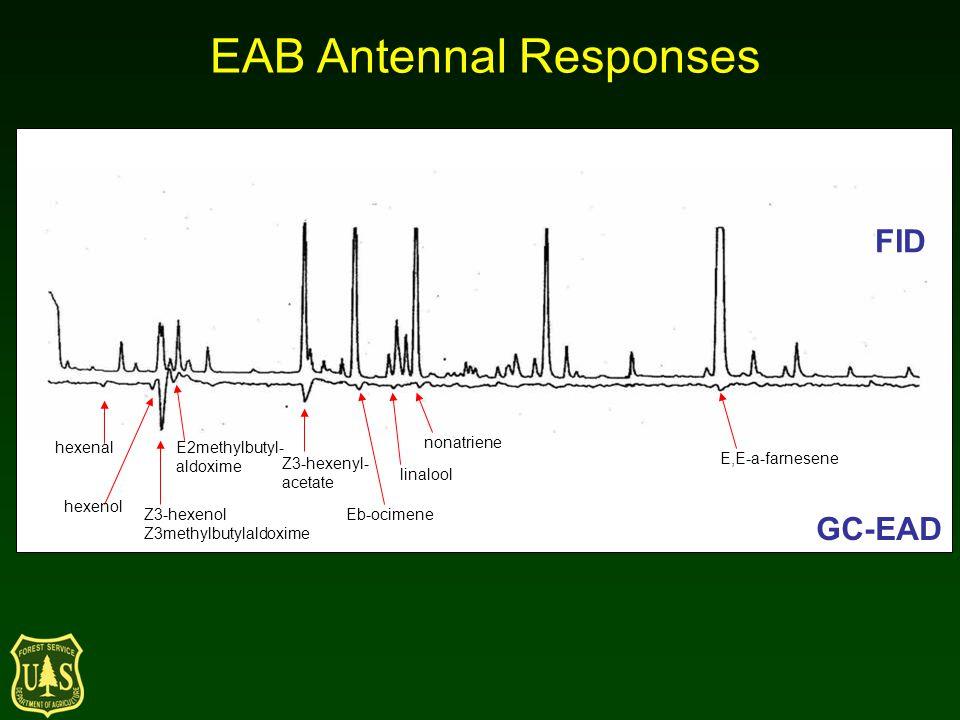 FID GC-EAD hexenal hexenol Z3-hexenol Z3methylbutylaldoxime E2methylbutyl- aldoxime Z3-hexenyl- acetate Eb-ocimene linalool nonatriene E,E-a-farnesene EAB Antennal Responses