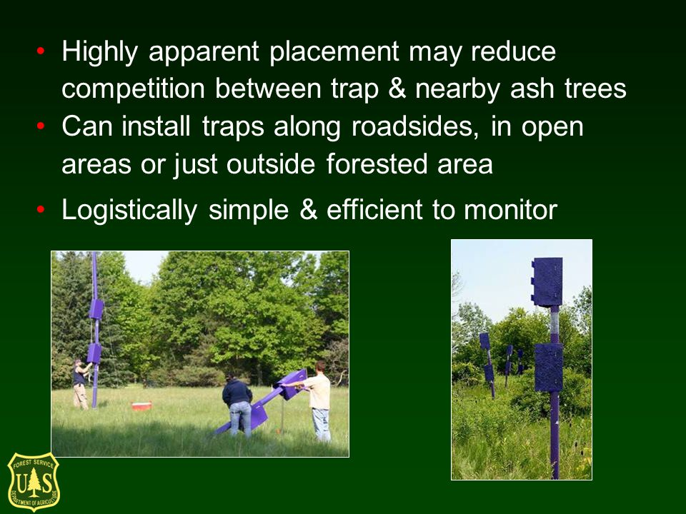Highly apparent placement may reduce competition between trap & nearby ash trees Can install traps along roadsides, in open areas or just outside forested area Logistically simple & efficient to monitor