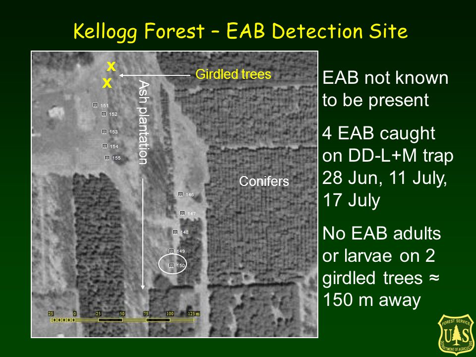 Kellogg Forest – EAB Detection Site x x Girdled trees Ash plantation Conifers EAB not known to be present 4 EAB caught on DD-L+M trap 28 Jun, 11 July,