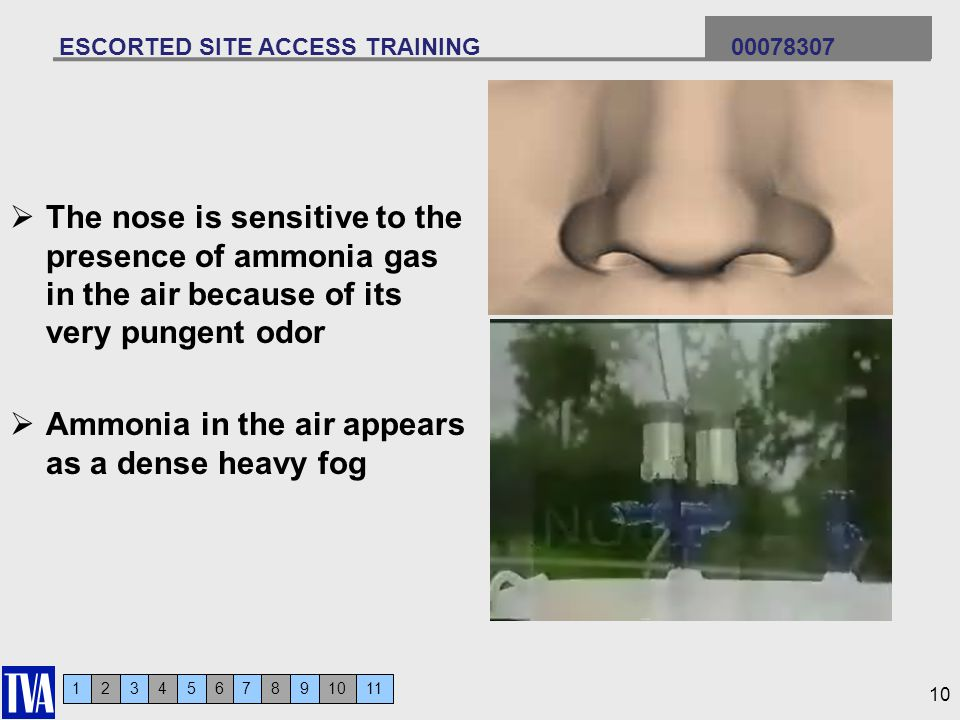 123456 ESCORTED SITE ACCESS TRAINING 00078307 7911810 The nose is sensitive to the presence of ammonia gas in the air because of its very pungent odor Ammonia in the air appears as a dense heavy fog 10