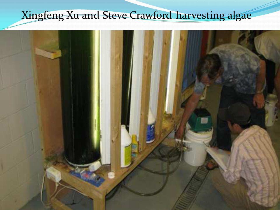 12 Xingfeng Xu and Steve Crawford harvesting algae