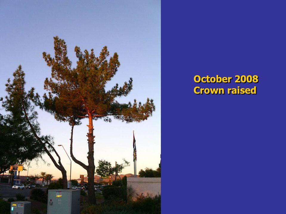 October 2008 Crown raised October 2008 Crown raised