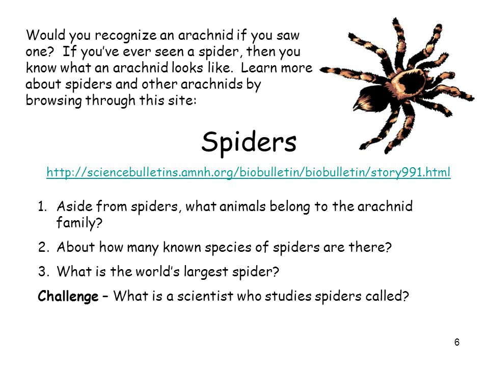 6 Would you recognize an arachnid if you saw one? If youve ever seen a spider, then you know what an arachnid looks like. Learn more about spiders and