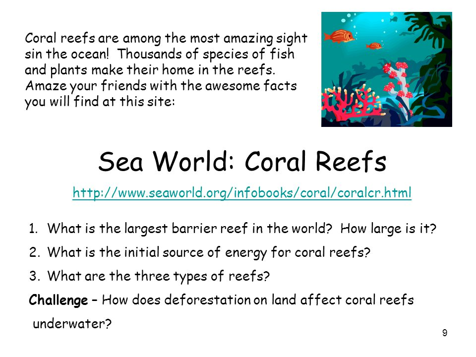 9 Coral reefs are among the most amazing sight sin the ocean! Thousands of species of fish and plants make their home in the reefs. Amaze your friends