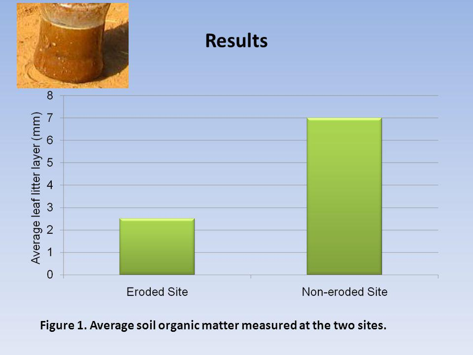 Figure 1. Average soil organic matter measured at the two sites. Results