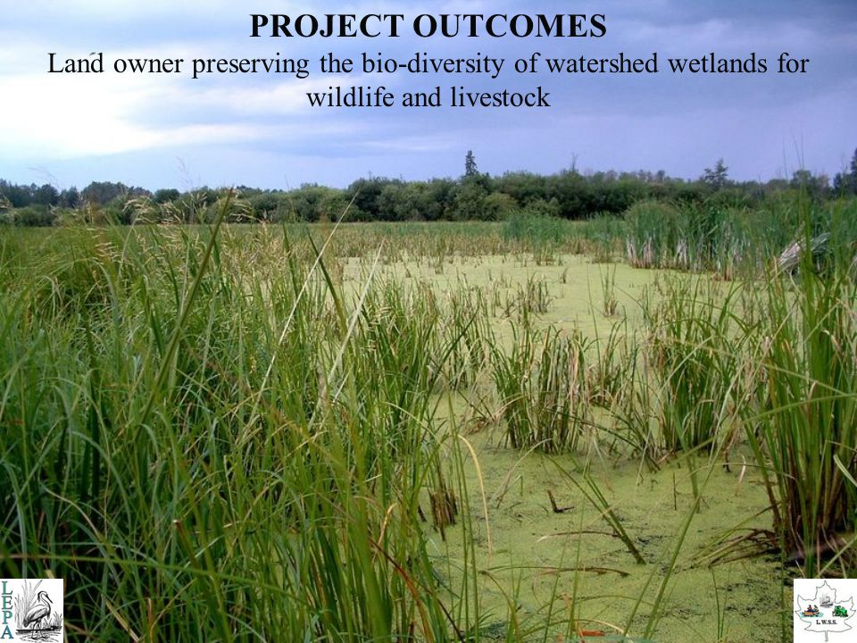 Develop a environmentally friendly, clean water source as a better alternative to utilizing pond and marsh GRAZING STRATEGY