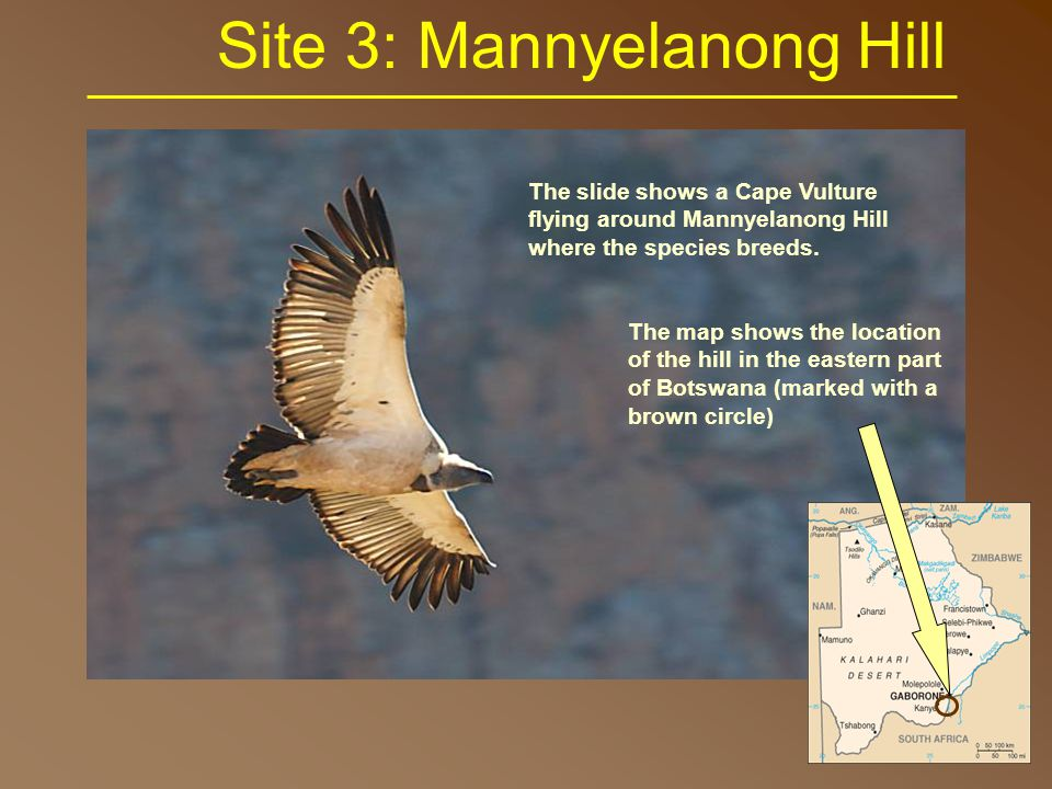 Site 3: Mannyelanong Hill The slide shows a Cape Vulture flying around Mannyelanong Hill where the species breeds.