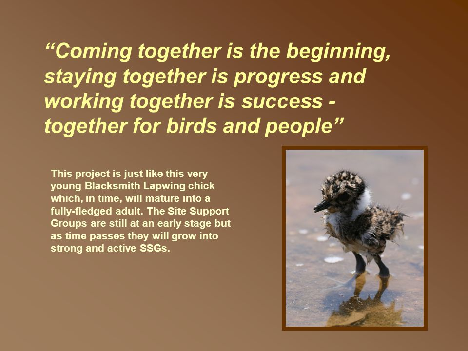Coming together is the beginning, staying together is progress and working together is success - together for birds and people This project is just like this very young Blacksmith Lapwing chick which, in time, will mature into a fully-fledged adult.