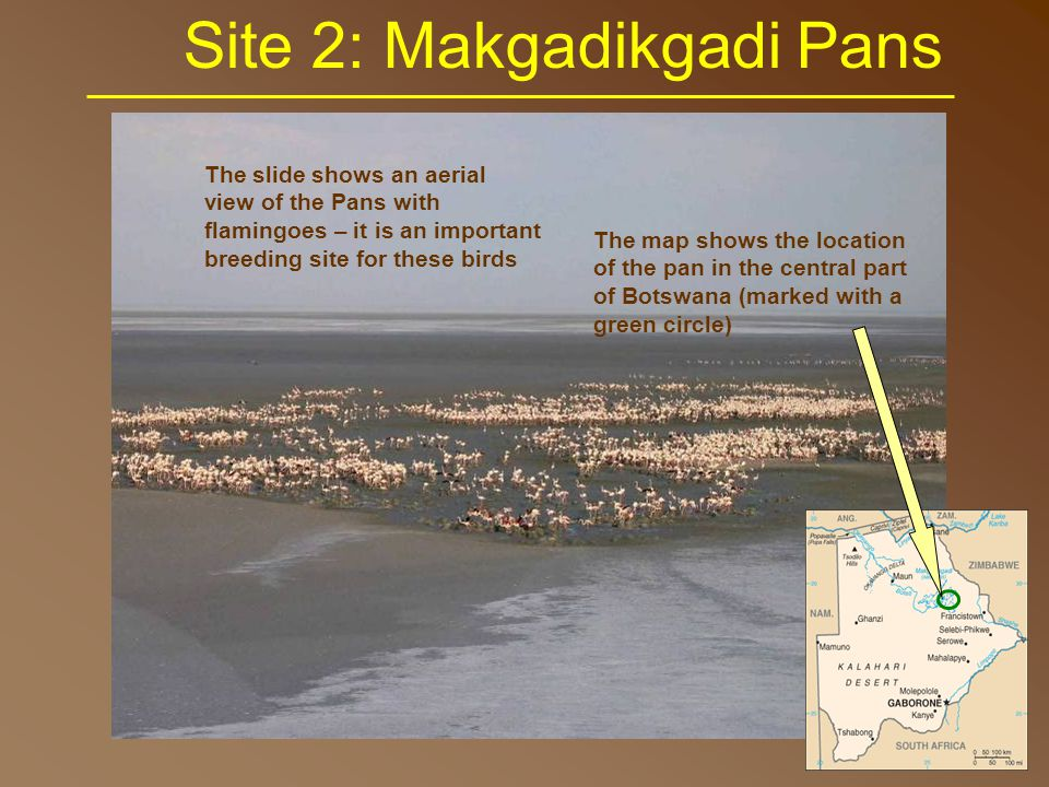Site 2: Makgadikgadi Pans The Makgadikgadi Pans IBA was chosen as one of the areas because it is partially protected (only the western part is national park).