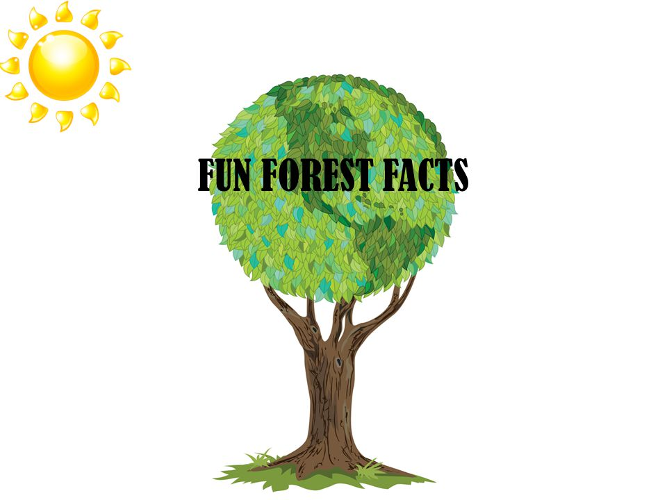 FUN FOREST FACTS