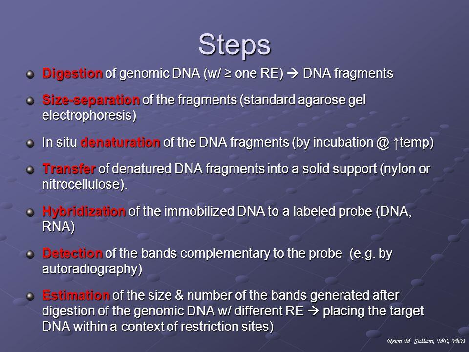 Steps Digestion of genomic DNA (w/ one RE) DNA fragments Size-separation of the fragments (standard agarose gel electrophoresis) In situ denaturation