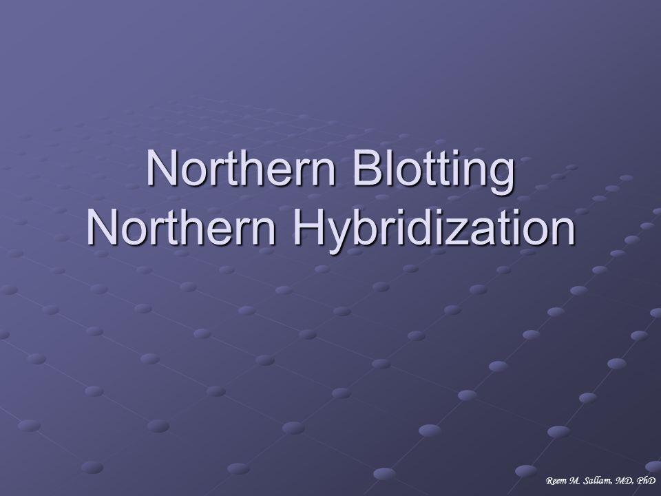 Northern Blotting Northern Hybridization Reem M. Sallam, MD, PhD