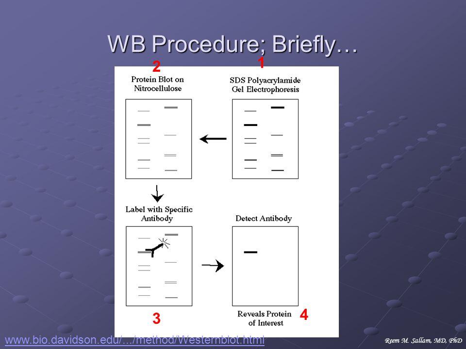WB Procedure; Briefly… www.bio.davidson.edu/.../method/Westernblot.html 1 2 3 4 Reem M. Sallam, MD, PhD