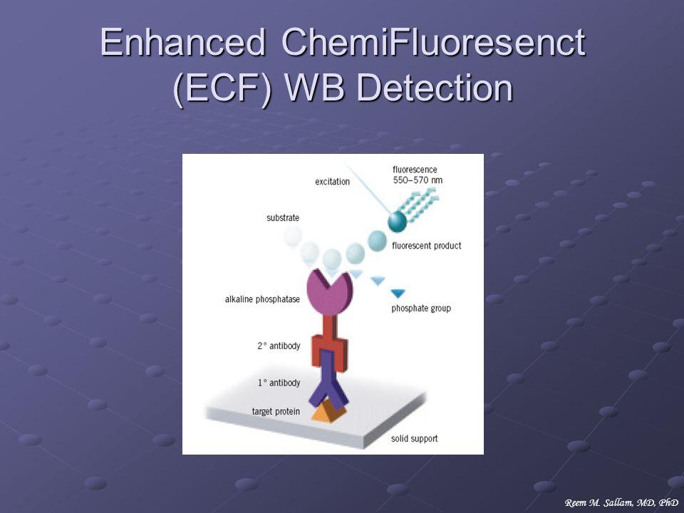 Enhanced ChemiFluoresenct (ECF) WB Detection Reem M. Sallam, MD, PhD