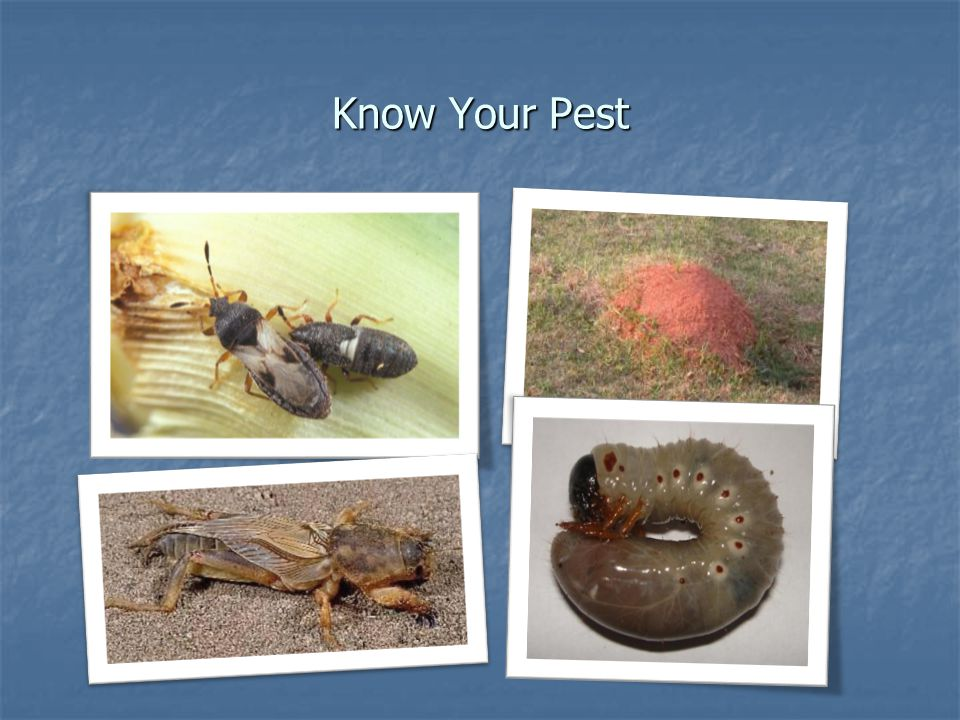 Know Your Pest
