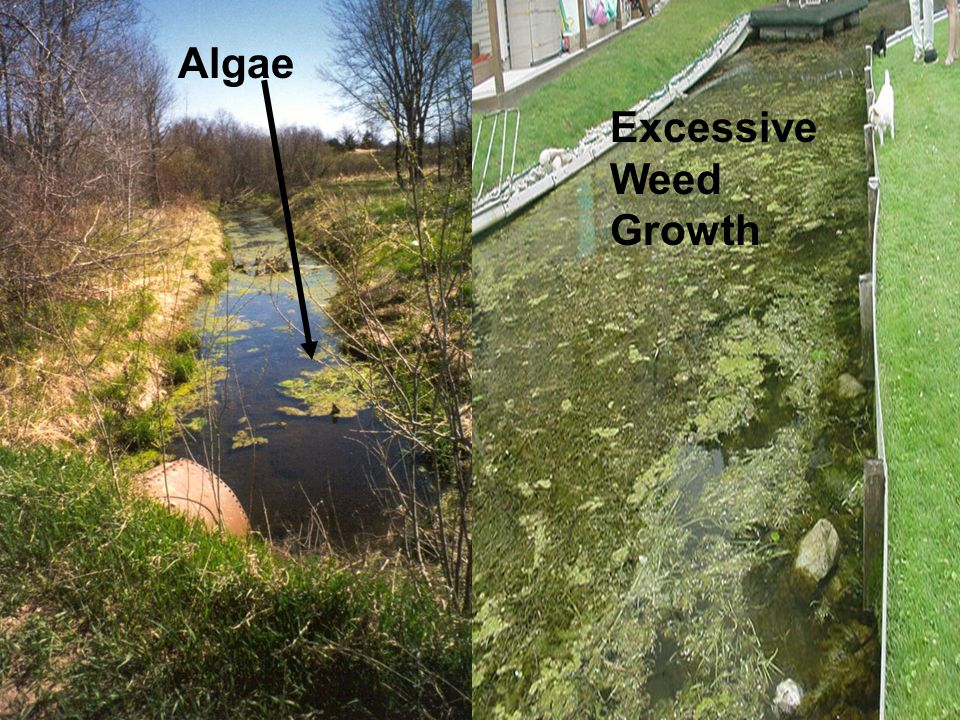 Algae Excessive Weed Growth