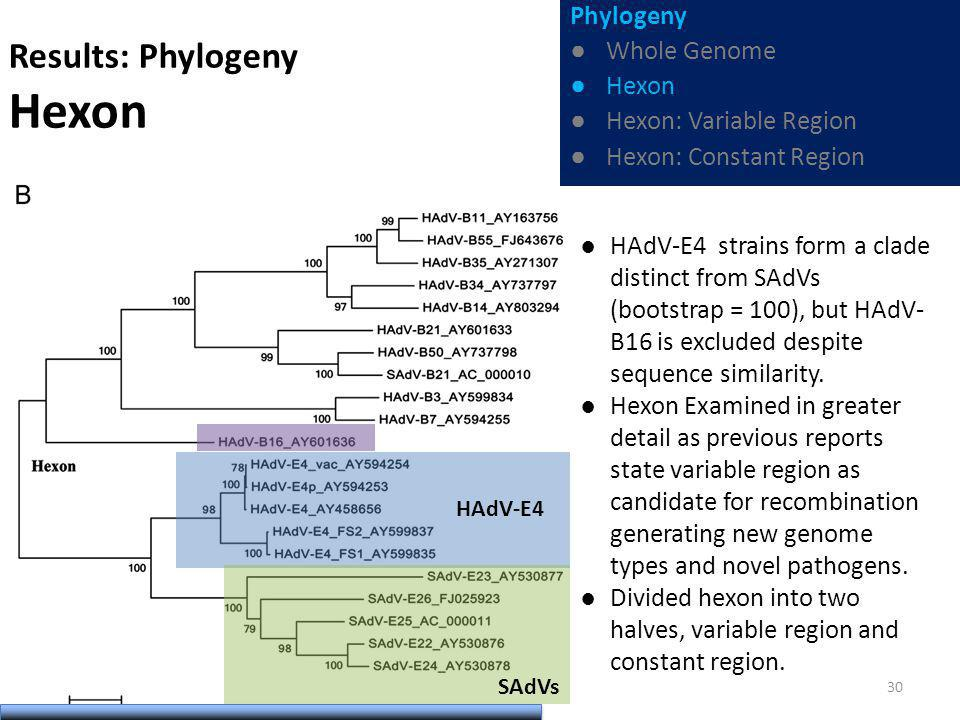 Results: Phylogeny Hexon HAdV-E4 strains form a clade distinct from SAdVs (bootstrap = 100), but HAdV- B16 is excluded despite sequence similarity.