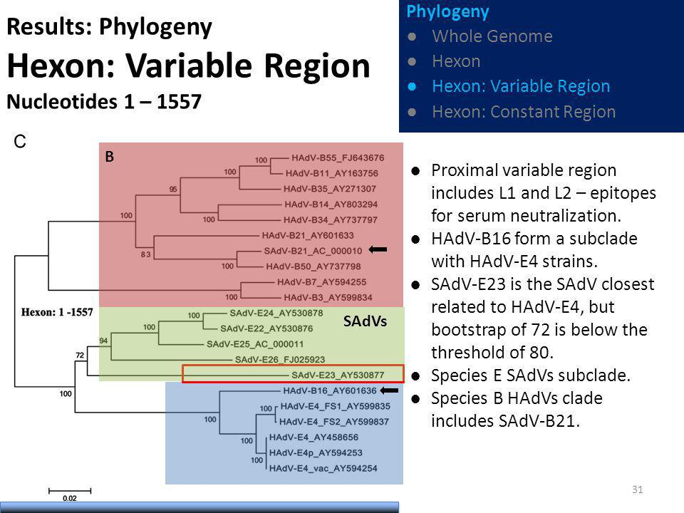 Results: Phylogeny Hexon: Variable Region Nucleotides 1 – 1557 Proximal variable region includes L1 and L2 – epitopes for serum neutralization.